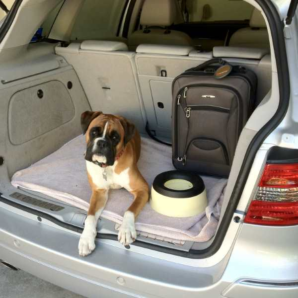 Dog sitting in the trunk with a bowl