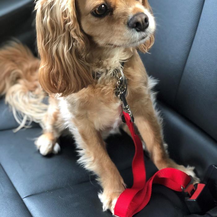 Dog Car Seat Belt Attachment Red