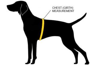 chest size_girth1