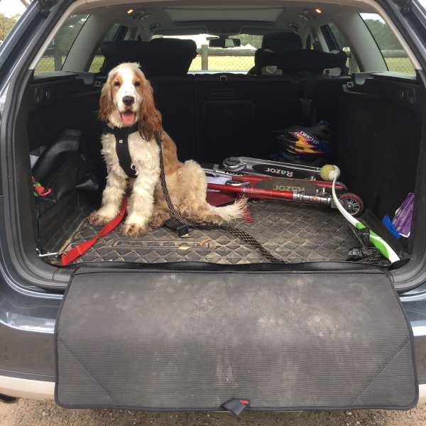 Dog Bumper Guard : Car bumper protection mat guard dogculture