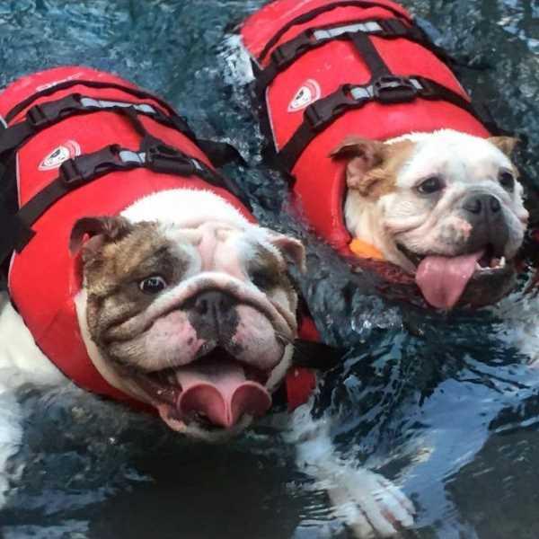 DFD (Dog Flotation Device) Dog Life Jacket EzyDog   DogCulture