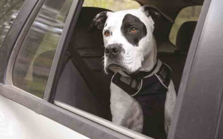 Dog restraints for cars laws