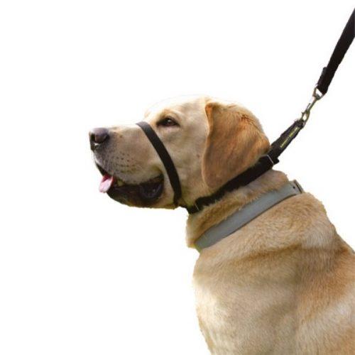 Canny Collar - No Pull Dog Collar
