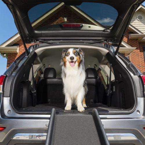 Solvit Ultralite Pet Ramp for cars