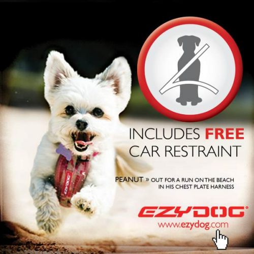 EzyDog_Chest_Plate_Harness