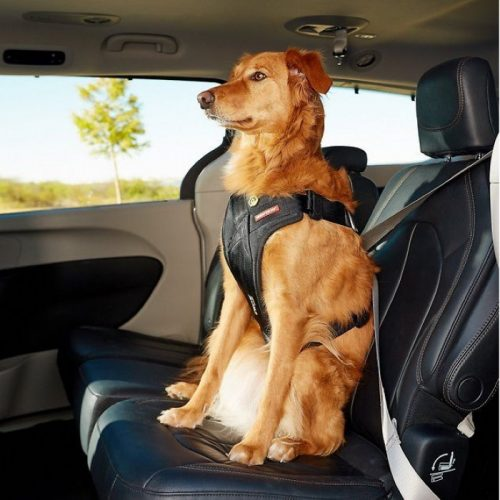 EzyDog Drive Car Safety Harness for dogs