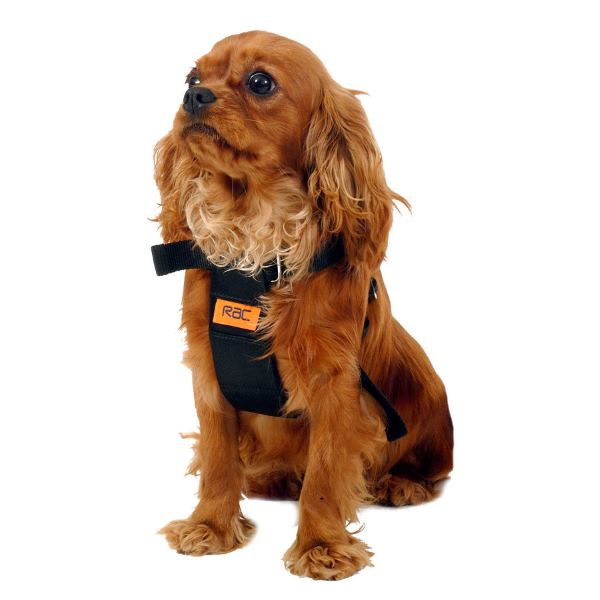 Rac Dog Harness Small