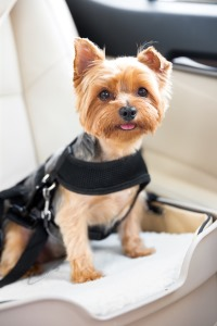Travelin Dog Booster Seat