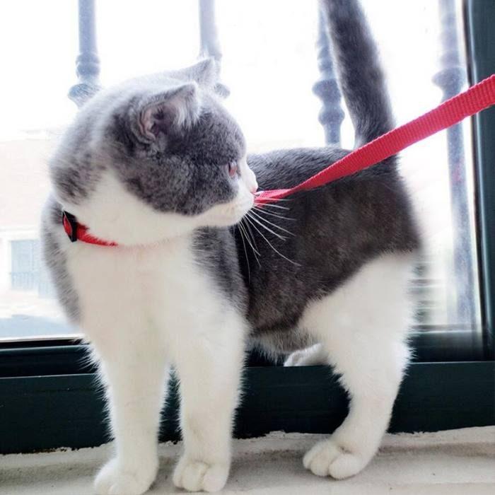 Adjustable Cat Puppy Walking Leash