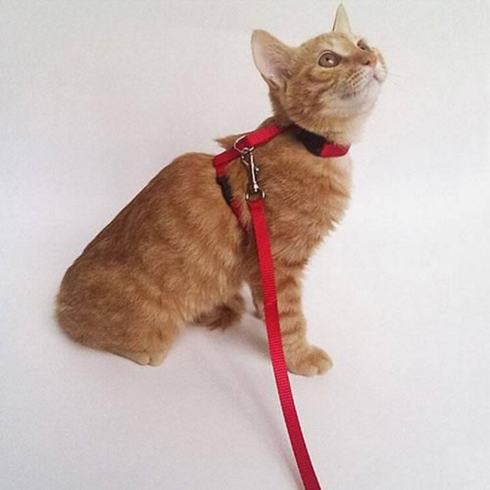 Adjustable Cat Puppy Leash