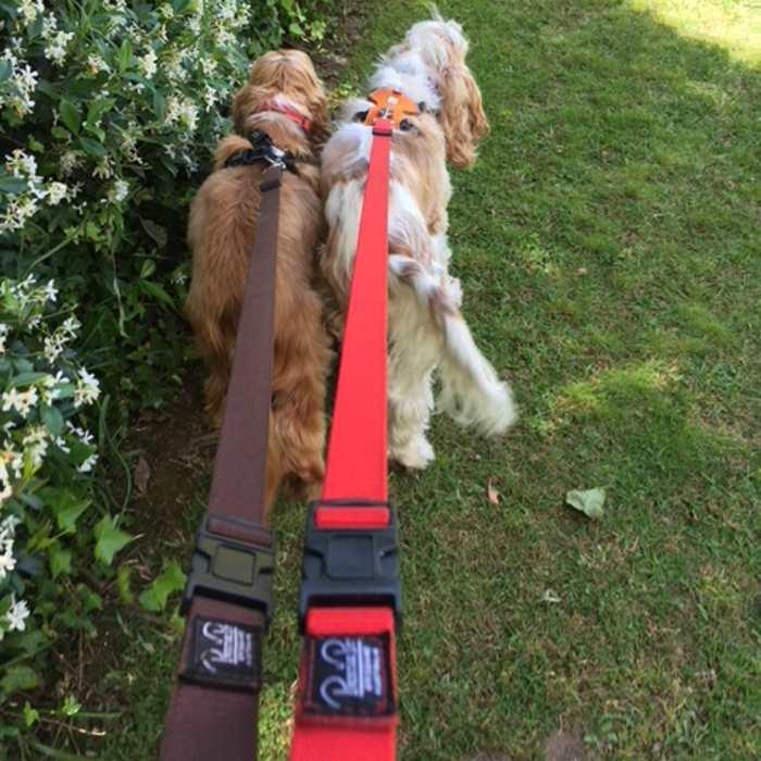 Adjustable nylon dog lead