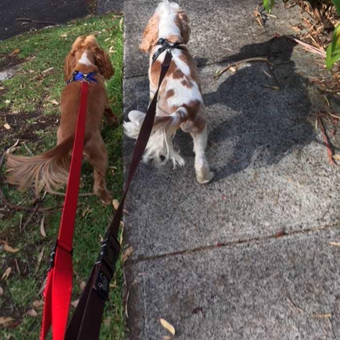 Adjustable dog leash