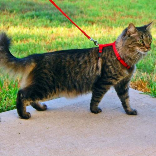 Puupy & Cat Harness