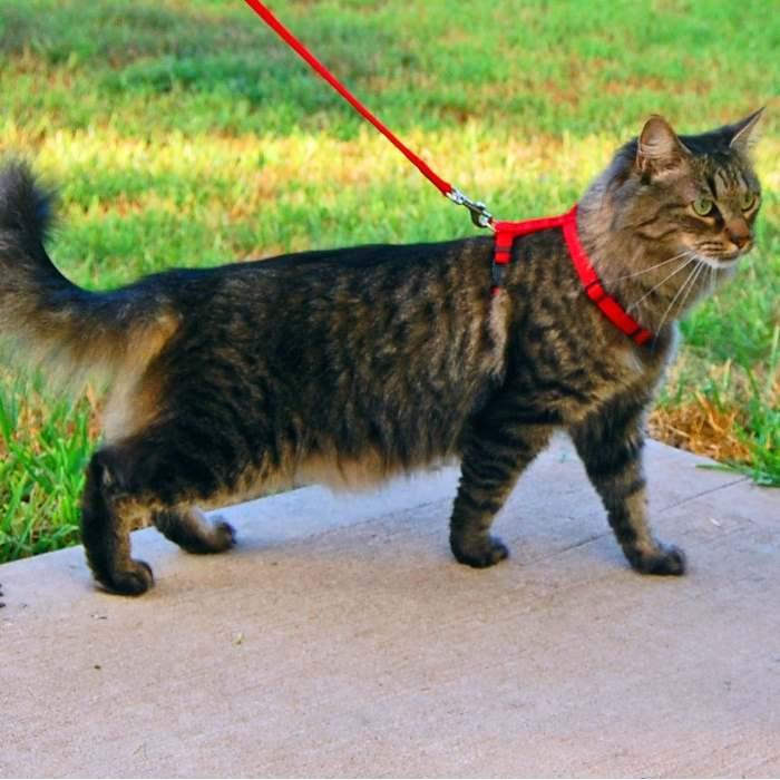 Puupy & Cat Harness