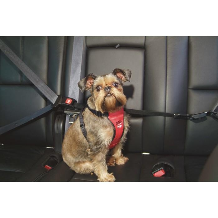 How To Use A Tether For Dog In Car