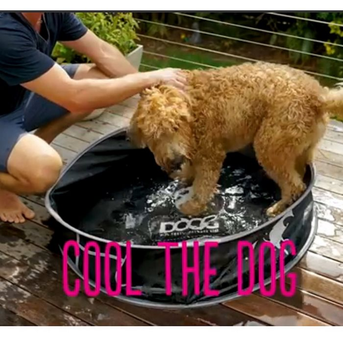 DOOG PopUp Portable Dog Pool