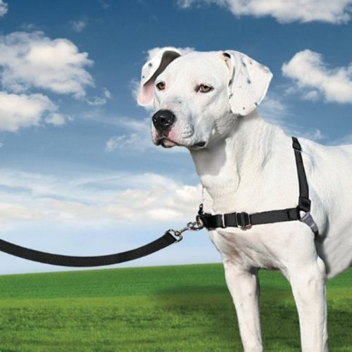 PetSafe EasyWalk Harness Black