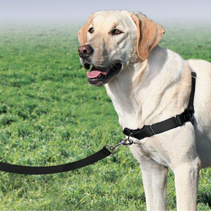 PetSafe EasyWalk Harness with Leash