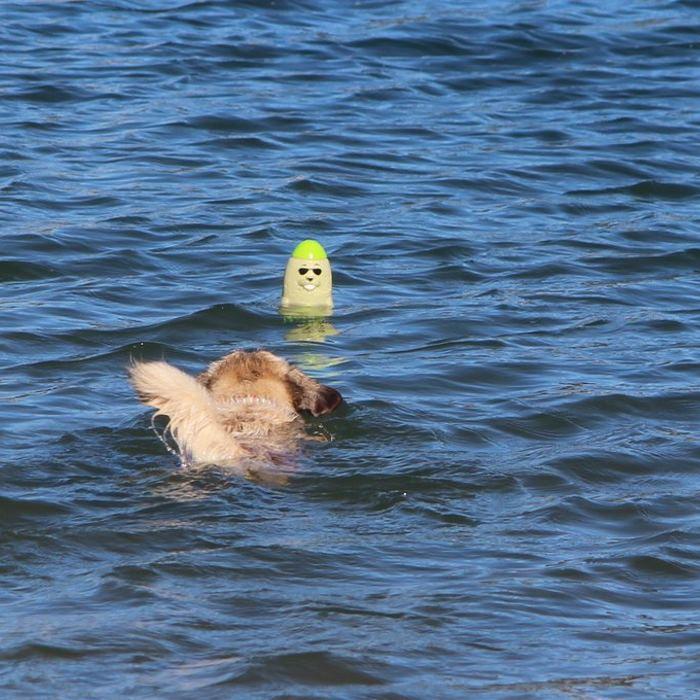 DOOG The Seals Floating Dog Toy
