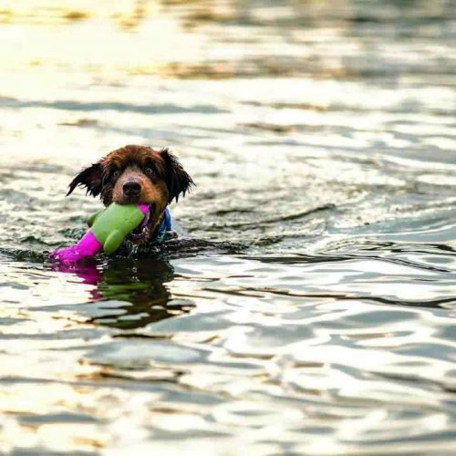 DOOG The Seals Water Dog Toy