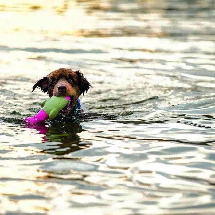 DOOG The Seals Water Dog Toy