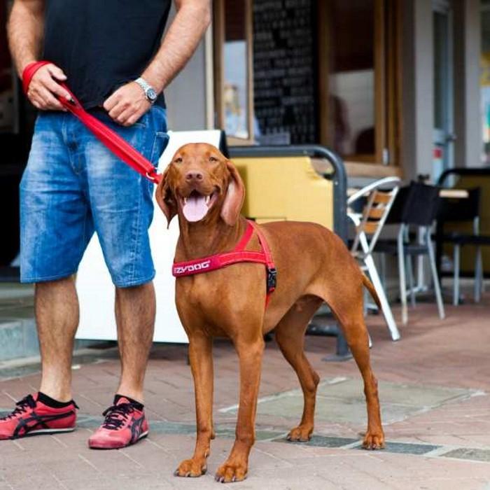 EzyDog Vario4 Dog Leash