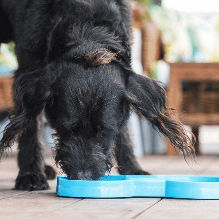SloDog Slow Feed Bowl Dog