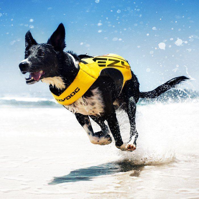 EzyDog DFD x2 Boost Dog Life Jacket