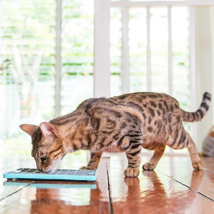 Lickimat Playdate Deluxe Cat Turquoise