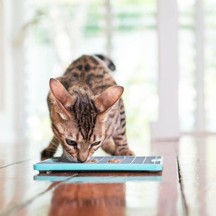 Lickimat Playdate Deluxe Turquoise Cat LS