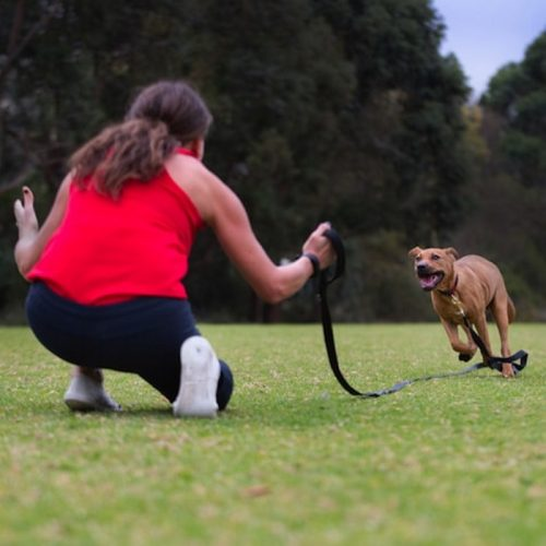 Canny-Recall-Training-long-dog-Leash