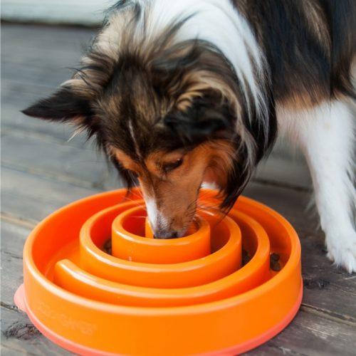 Outward Hound Fun Feeder_Orange_Large_Dog