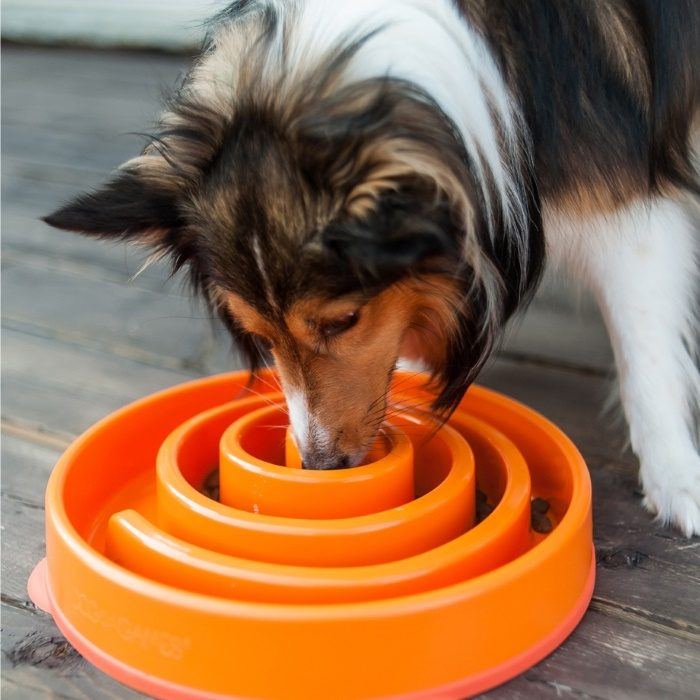Outward Hound Fun Feeder_Orange_Large_Dog
