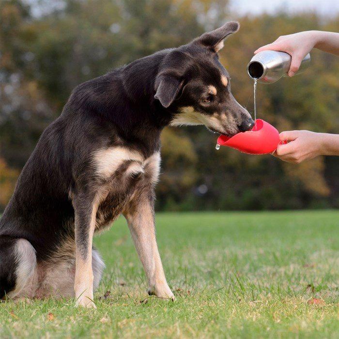 Kong H2O Dog Travel Water Bottle_Dog Drinking