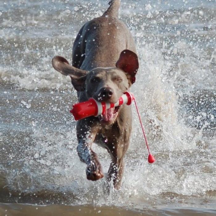 Rogz Lighthouse Floating Beach Dog Toy