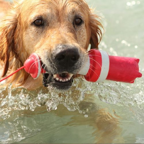 Rogz Lighthouse Floating Fetch Dog Toy