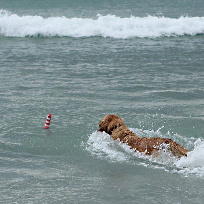 Rogz Lighthouse Floating Water Dog Beach Toy