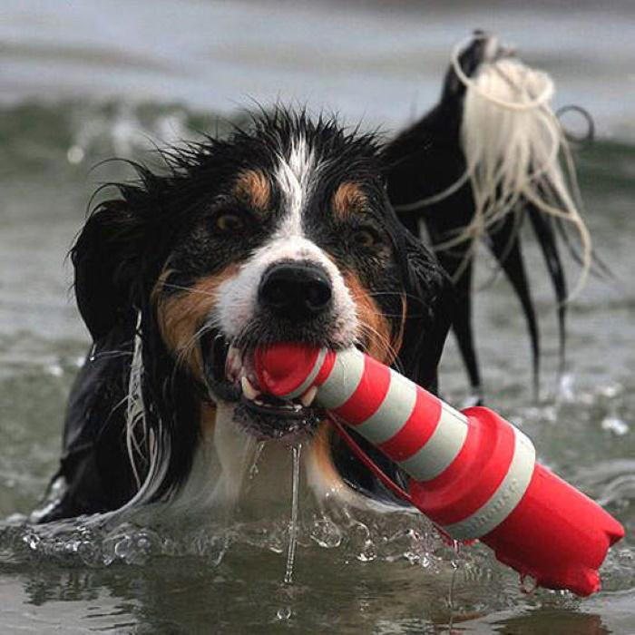 Rogz Lighthouse Floating Water Dog Toy