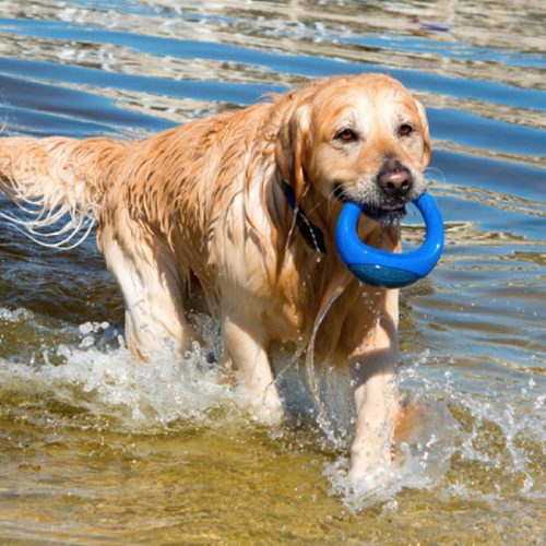 Rogz-Pop-Upz-Dog-Toy-Blue_Beach Dog