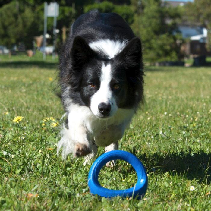 Rogz-Pop-Upz-Dog-Toy-Blue_Park Dog Pick Up