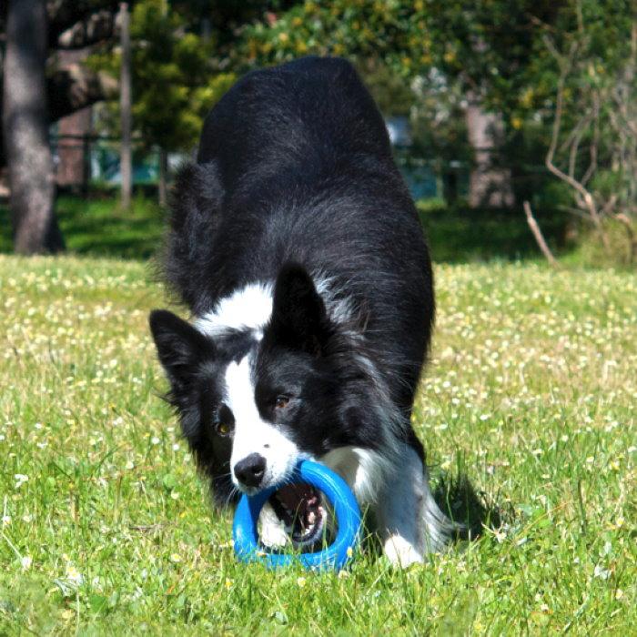 Rogz-Pop-Upz-Dog-Toy-Blue_Park Dog
