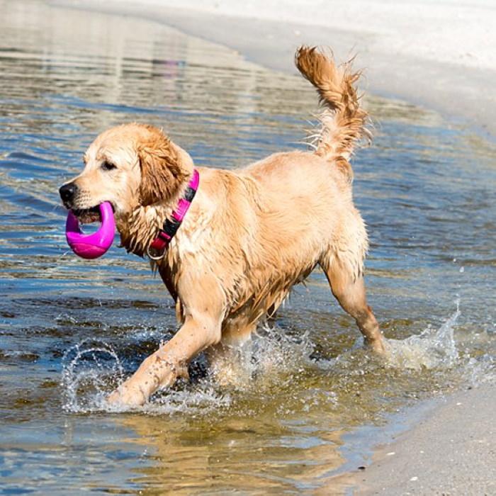 Rogz-Pop-Upz-Dog-Toy-Pink_Beach Dog
