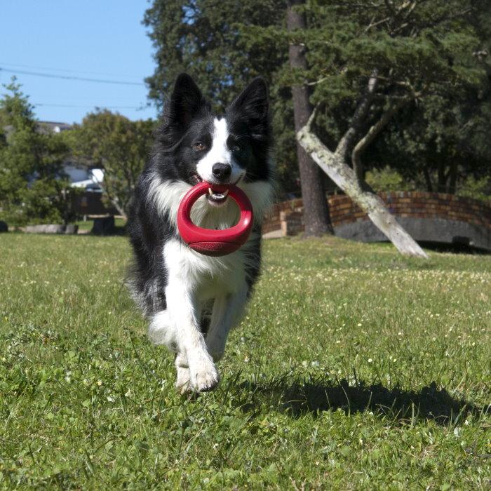 Rogz-Pop-Upz-Dog-Toy-Red_Park Dog