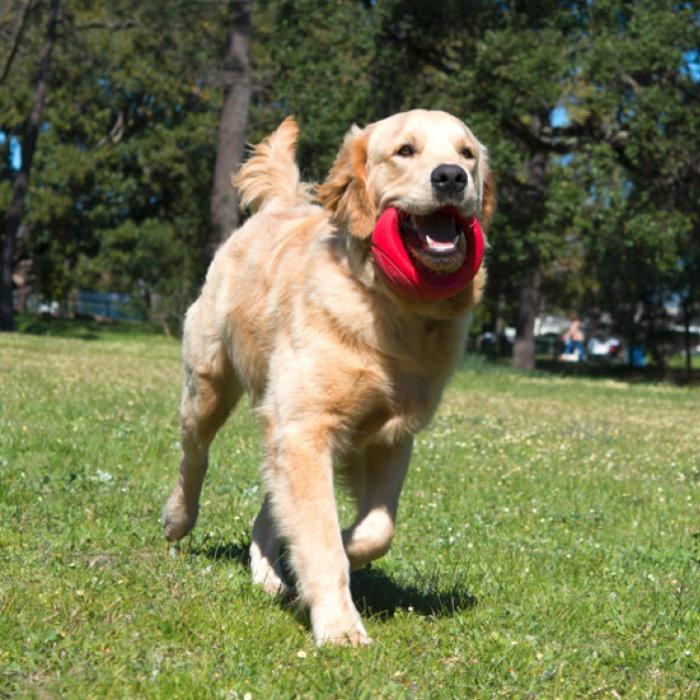 Rogz-Pop-Upz-Dog-Toy_Red_Park Dog