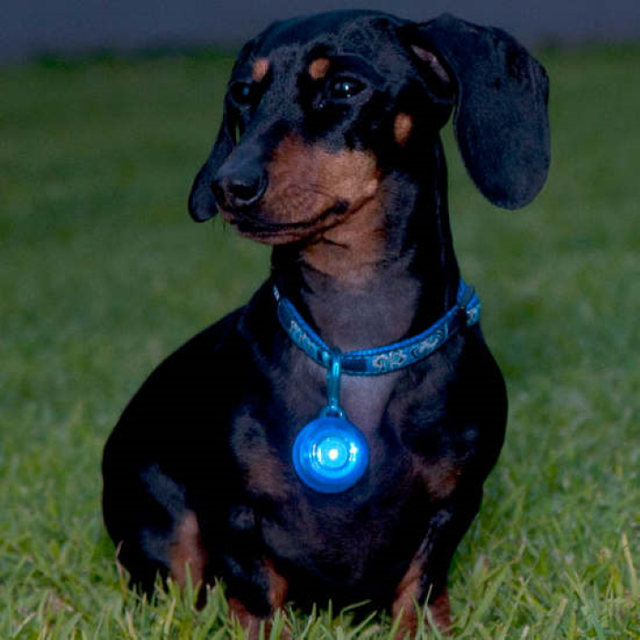 Rogz Roglite Safety Light for Dog Collar Blue
