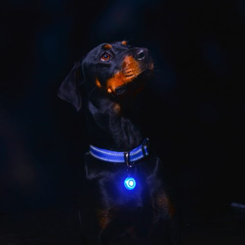 Rogz Roglite Safety Light for Dogs Blue