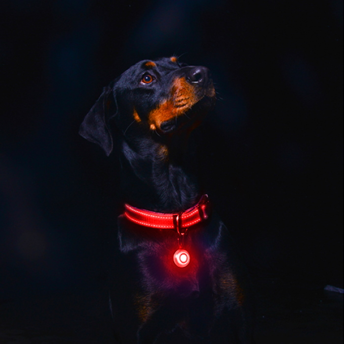 Rogz Roglite Safety Light for Dogs Red
