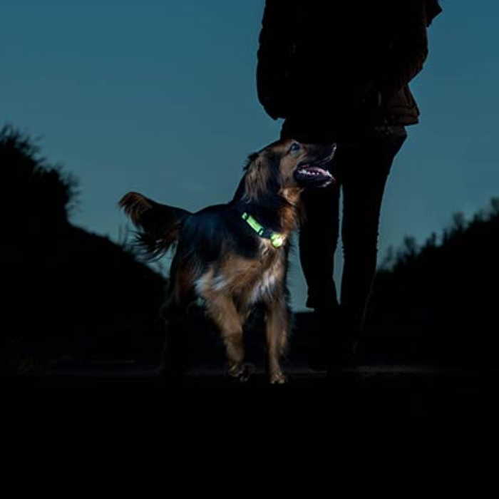 Rogz Roglite Safety Night Light for Dogs