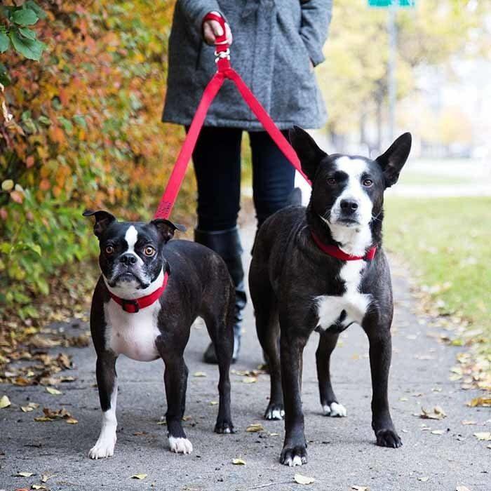 Tangle Free 2 Dog Walking Lead