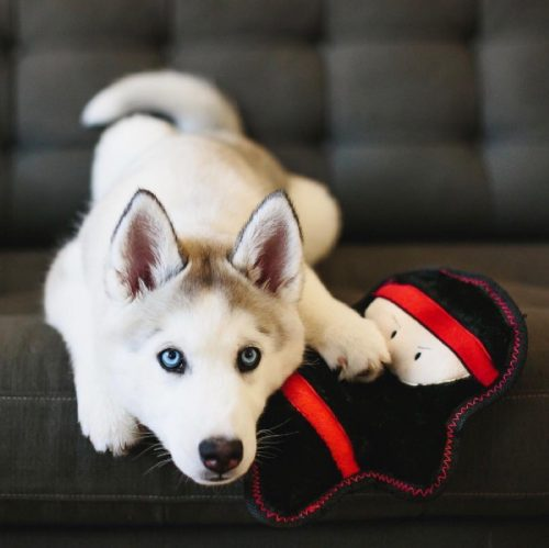 Z-Stitch Warriorz Nobu the Ninja Plush Squeaker Dog Toy